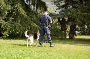 Guard Dogs Training With Police In Brisbane